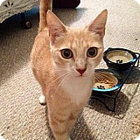 Adopt A Pet :: Princess Buttercup - Vero Beach, FL