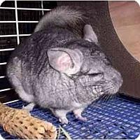 Adopt A Pet :: #52 Kirby - Avondale, LA