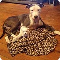 Adopt A Pet :: Miss Juniper Breeze - Staunton, VA