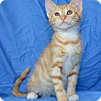 Adopt A Pet :: Walter - Davis, CA