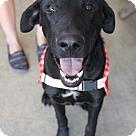 Adopt A Pet :: Elliott