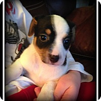 Adopt A Pet :: Penny - Indian Trail, NC