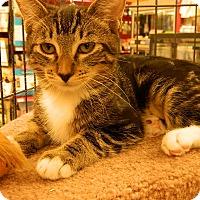 Adopt A Pet :: Renee - Redondo Beach, CA