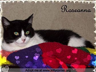 Domestic Shorthair Cat for adoption in Liverpool, New York - Roseanna