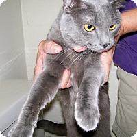 Adopt A Pet :: Papi - Scottsdale, AZ