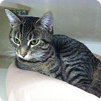 Adopt A Pet :: Sheba - Riverhead, NY