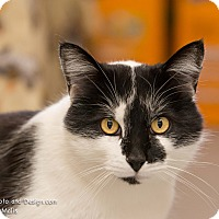 Adopt A Pet :: Scotty - Fountain Hills, AZ