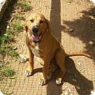 Adopt A Pet :: Colorado Denver - ADOPTION PENDING!