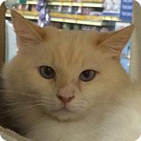 Adopt A Pet :: Raiden - Winchester, CA