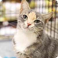 Adopt A Pet :: Essie - Sacramento, CA
