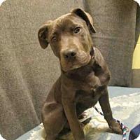 Adopt A Pet :: *SMOKE - Upper Marlboro, MD