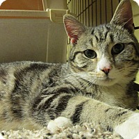 Adopt A Pet :: ROLLIE - Acme, PA