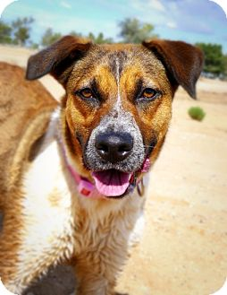 Retriever (Unknown Type) Mix Dog for adoption in Casa Grande, Arizona - Emma
