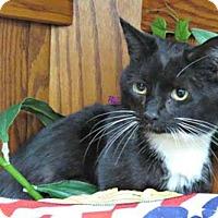 Adopt A Pet :: Cottontail - Merrifield, VA