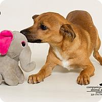 Adopt A Pet :: Luke - Baton Rouge, LA