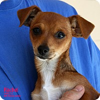 Adopt A Pet :: Rachel - Santa Maria, CA