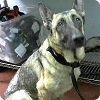 Adopt A Pet :: FABLE - Atlanta, GA
