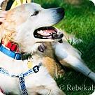 Adopt A Pet :: Rafa (Has application)