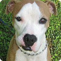 Adopt A Pet :: Jet - Hillsboro, OH