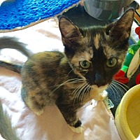 Adopt A Pet :: April #1 - Lunenburg, MA