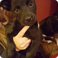 Adopt A Pet :: Trudy - Ashville, OH