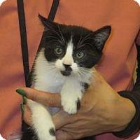 Adopt A Pet :: Ella - Wildomar, CA