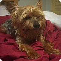 Adopt A Pet :: Oatmeal - Fort Lauderdale, FL