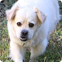 Adopt A Pet :: Bucky (Buckwheat) - Woonsocket, RI