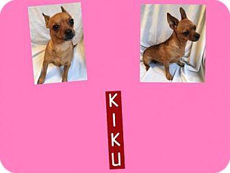 Chihuahua Mix Dog for adoption in Plano, Texas - KIKU