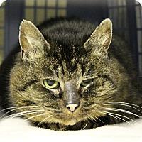 Adopt A Pet :: Chili - Mission, BC