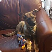 Adopt A Pet :: KUJO - Winnipeg, MB