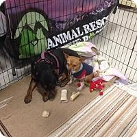 Adopt A Pet :: Tyco & Susie - Denver, CO