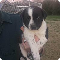 Adopt A Pet :: Clint - Trenton, NJ