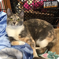 Adopt A Pet :: Jaycie & Jackson - Horsham, PA
