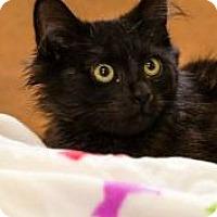 Adopt A Pet :: Phelps - Chesapeake, VA