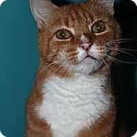 Adopt A Pet :: Harry - North Branford, CT