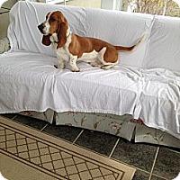 Adopt A Pet :: WIlson - Columbia, SC