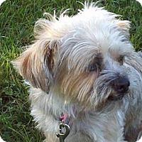Adopt A Pet :: Bendy - Brattleboro, VT
