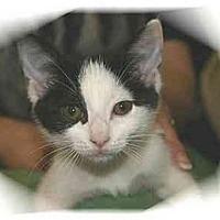 Adopt A Pet :: Kiana - Montgomery, IL