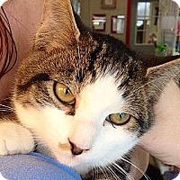 Adopt A Pet :: Destin - Green Bay, WI