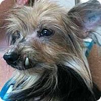 Adopt A Pet :: Bridget - Southampton, PA