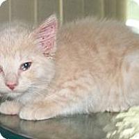Adopt A Pet :: Tiny Tina - Acme, PA