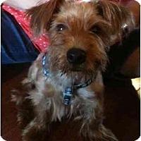 Adopt A Pet :: Jamie - West Palm Beach, FL
