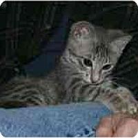 Adopt A Pet :: Scarlett - Marietta, GA