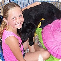 Adopt A Pet :: Pearl - Vista, CA