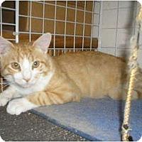 Adopt A Pet :: Porangie - Brea, CA