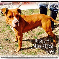 Adopt A Pet :: Miss Dee - Dillon, SC