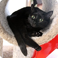 Adopt A Pet :: Tipsy Turvy - Chicago, IL
