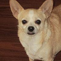Adopt A Pet :: Taco - Catharpin, VA