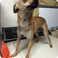 Adopt A Pet :: edith - Elk Grove, CA